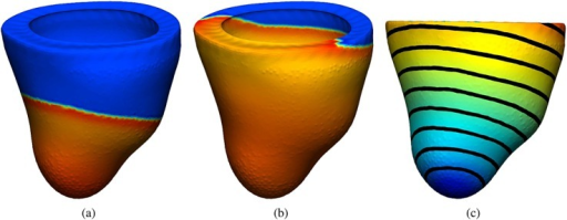 (a) and (b) Electrical activity propagation in a human left ventricular mesh at different simulation stages represented by a color map from dark blue ( − 86) to red (35); (c) activation times represented by a color map from dark blue (0) to red (75) and contour bands.