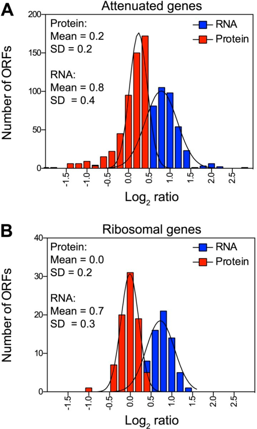 Attenuation takes place posttranslationally in cells grown in selective medium.(A) Histograms of the log2 ratios of the relative mRNA (blue) and protein levels (red) of the 486 attenuated proteins from disomic cells grown in synthetic medium compared to wild-type. Fits to a normal distribution are shown (black lines). (B) Histograms of the log2 ratios of the relative mRNA (blue) and protein levels (red) of 83 ribosomal protein genes. Fits to a normal distribution are shown (black lines).DOI:http://dx.doi.org/10.7554/eLife.03023.015