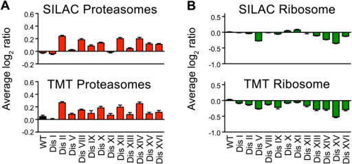 Ribosome and proteasome levels in aneuploid cells.(A) Averaged protein levels of proteasome subunits of each disomic strain relative to wild-type cells grown in synthetic (top) or YEPD (bottom) medium. Error bars represent SEM. (B) Averaged protein levels of ribosome subunits of each disomic strain relative to wild-type cells grown in synthetic (top) or YEPD (bottom) medium. Error bars represent SEM.DOI:http://dx.doi.org/10.7554/eLife.03023.027