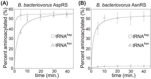 B. bacteriovorus AspRS aspartylates tRNAAsn.Aminoacylation of in vitro transcribed tRNAAsp (○) and tRNAAsn (▵) by either (A) B. bacteriovorus AspRS or (B) B. bacteriovorus AsnRS. Reactions were carried out at 37°C with 1.0 µM 32P-labeled tRNAAsp or Asn, 11.0 µM tRNAAsp or Asn, 4.0 mM ATP, 4.0 mM relevant amino acid (L-Asp or L-Asn) and 3.0 µM enzyme. Experiments were repeated three times and error bars represent standard deviations.