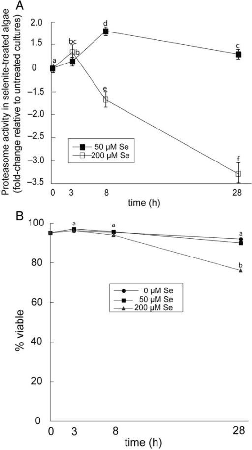 Proteasome activity in Chlamydomonas treated with selenite. (A) Values for proteasome activity represent fold change in activity of selenite-treated cells relative to untreated cells at each time interval. (B) Percentage of viable cells in cultures with the indicated treatments. Data are the mean of three biological replicates and standard deviation. Lowercase letters represent a significant difference in relative activity at each time point (P < 0.05). Standard errors were too small to plot.