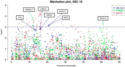 Chromosome-wide Manhattan plot of Sus scrofa chromosome (SSC) 18. Drip loss measured in Musculus longissimus dorsi (LD) 24 h post-mortem (p.m.); PGAM2 = phosphoglycerate mutase 2; the declaration of gene symbols (in black boxes) can be obtained from Ensembl or http://www.ncbi.nlm.nih.gov/genegenes.