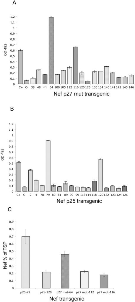 ELISA analysis of transgenic tobacco plants expressing cytosolic Nef. A:Representative ELISA assay of p27 mut Nef tobacco lines. C+: 100 ng of E.coli recombinant Nef; C-: control plant, untrasformed tobacco. The numbers on the x axis indicate individual transgenic tobacco lines. B:Representative ELISA assay of p25 Nef tobacco lines. C+: 100 ng of E.coli recombinant Nef; C-: control plant, untrasformed tobacco. The numbers on the x axis indicate individual transgenic tobacco lines. C: ELISA quantification of plant-expressed Nef variants. The Nef expression levels are expressed as percentage of total soluble protein (TSP) from transgenic plants. The values shown represent averages of two experiments. The numbers on the x axis indicate individual transgenic tobacco lines.