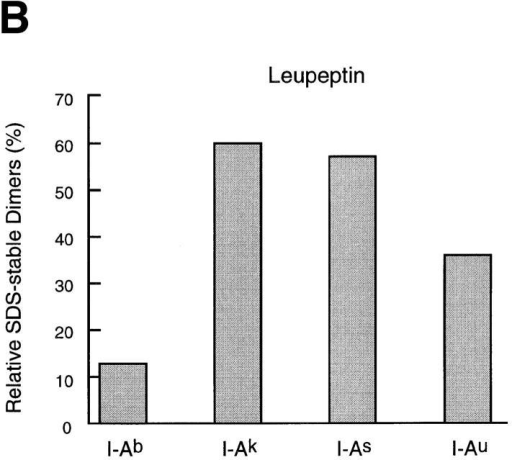 The effect of cysteine protease inhibition on maturation of  MHC class II molecules varies widely among allelic products. (A) Spleen  cells of mice of the haplotypes indicated were pulse-labeled and chased for  4 h in the absence or presence of 1 mM leupeptin or 3 nM LHVS, and  their I-A molecules immunoprecipitated with an anti-I-Aα rabbit serum  (44). Immunoprecipitates were run on 12.5% SDS-PAGE without (top  half) or after (bottom half) boiling. (B) Amount of I-A SDS-stable dimers  generated in leupeptin-treated splenocytes of different haplotypes relative  to their control counterparts. The amount of SDS-stable I-Ad complexes  in control cells was too small to perform a reliable comparison to the  drug-treated samples. (C) Same as in B, for the LHVS-treated samples.  (D) Cbz–[125I]–Tyr–Ala–CN2 labeling of H-2d, H-2b, and H-2k splenocytes.