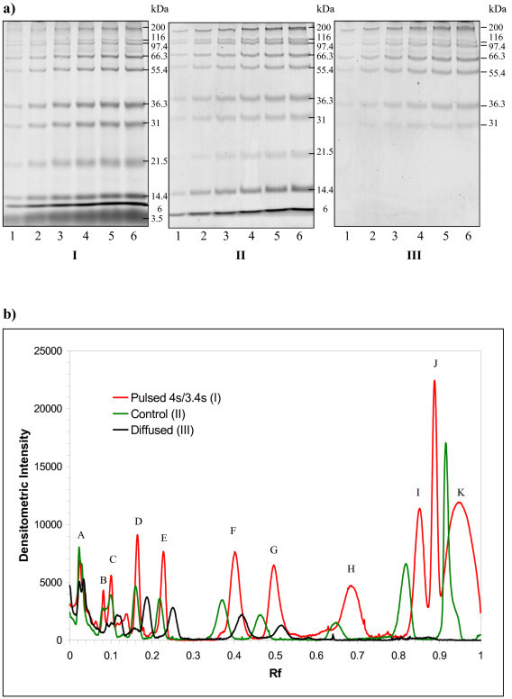Increased local concentrations of protein bands upon pulsing. Protein band intensity analyses in FIGE (a I), CFE (a II), and CFE followed by resting within glass plates in room temperature for 12 hours (a III). Lanes 1 to 6 are 2 μL, 4 μL, 6 μL, 8 μL, 10 μL, and 12 μL of Mark12 protein standards, respectively, in a self-cast Bio-Rad 14% SDS-PAGE 1 mm × 7 cm gel followed by Coomassie blue staining. a I) Gel was run with a pulsed-field at (4 sec/3.4 sec) at 200 V for 13 hours, with an average buffer temperature of 30°C. A II) Gel was run at a constant field of 200 V for one hour and an average buffer temperature of 25°C. a III) Gel was run at a constant field of 200 V for one hour and left at rest for another 12 hours within the glass plates to permit diffusion prior to staining. b) Densitometry analysis of protein bands in the gels of the three conditions tested. Molecular mass was represented by alphabet A to K, where A = 200 kDa, B = 116.3 kDa, C = 97.4 kDa, D = 66.3 kDa, E = 55.4 kDa, F = 36.3 kDa, G = 31.0 kDa, H = 21.5 kDa, I = 14.4 kDa, J = 6.0 kDa, and K = unresolved 3.5/2.0 kDa bands, respectively. Migration distance relative to the dye front (Rf) and intensity of bands from lane 6 of all three gels was densitometrically analyzed using Quantity One software. The graph results were the average of two independent experiments. The graph results were subsequently employed in the calculation of peak variance, σ2, in Table 1.