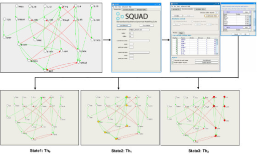 Identification of steady states using SQUAD. Graphical description of the identification of steady states using SQUAD. The model for the T-helper cell network (upper left figure) is loaded into SQUAD (upper center figure) using a CellDesigner sbml file. SQUAD displays the steady states identified in the network (upper right figures) through a scrollable list containing the values of the active nodes for each configuration. In addition the steady states can be visualized directly on the network topology (lower figures). For the T-helper network three steady states exist. Based on the molecular fingerprint, each state can be mapped to an existing biological state: State1 with all the nodes inactive corresponds to the Th0 cells. State2 with active IFNγ corresponds to the Th1 cells. State3 with active IL-4 corresponds to the Th2 state.