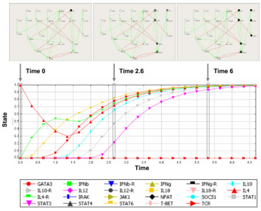 Dynamic simulation of the T-helper regulatory network, in the presence of IL-4. The plot provided by SQUAD displays the behavior of each component of the network according to time. The values range between 0 (inactive) and 1 (active). Time 0 indicates the time of addition of IL-4 to the network in the Th0 state. In addition to the plot display, SQUAD provides a dynamic network display (top panel) in which the nodes are colored in real-time according to the activation level from white (completely inactive) to black (completely active). The three top images are snapshots of the network at different time points. At Time 0 the network is in the Th0 and and a pulse of IL-4 is added to the system. The pulse originates a transitory state of activation (Time 2.6 is shown), which eventually leads the system to steady state representing the Th2 state (Time 6 and onwards). Time is expressed in arbitrary units.