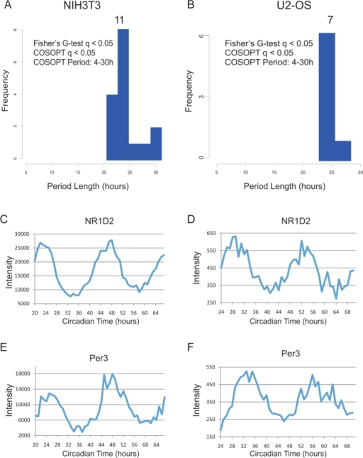 High temporal resolution profiling of NIH3T3 and U2OS cells reveals severely dampened circadian output.NIH3T3 and U2OS cells were grown to confluence and shocked with either forskolin (NIH3T3) or dexamethasone (U2OS) to synchronize their circadian clocks. mRNA samples were collected every h for 48 h and profiled on Affymetrix expression arrays. Rhythmic genes were identified using both COSOPT and Fisher's G-test at a false-discovery rate of <0.05. The period length of every rhythmic transcript was plotted as a histogram (A–B). To demonstrate that core clock genes cycle well in these data sets, panels C–F show the microarray intensity from two representative genes was plotted against CT time for both NIH3T3 and U2OS cells. NR1D2 (C–D) and Per3 (E–F) expression profiles show examples of cycling 24 h genes.