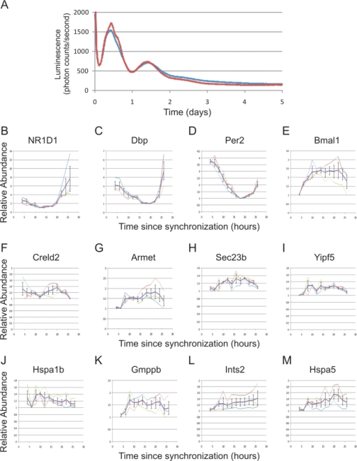 12 h rhythmic transcription is dampened in ex vivo hepatocytes.Primary hepatocytes were prepared from Per2-luciferase mice and shocked with dexamethasone to synchronize their circadian clocks. Real-time luciferase measurements revealed a circadian oscillation which dampens over the course of three days in vitro for two replicates shown in red and blue (A). Starting four h after dexamethasone shock, mRNA samples from these cells were collected every two h for an entire day and quantitative PCR was used to assess the levels of endogenous mRNAs. Core clock genes, including NR1D1, Dbp, Per2 and Bmal1, were rhythmic over the analyzed time points (B–E); however, 12 h genes were either severely dampened (F) or were completely arrhythmic (G–M). Error bars are +/−S.E.M.; thick purple traces represent the average of three replicates, thin traces show the result of each individual replicate.