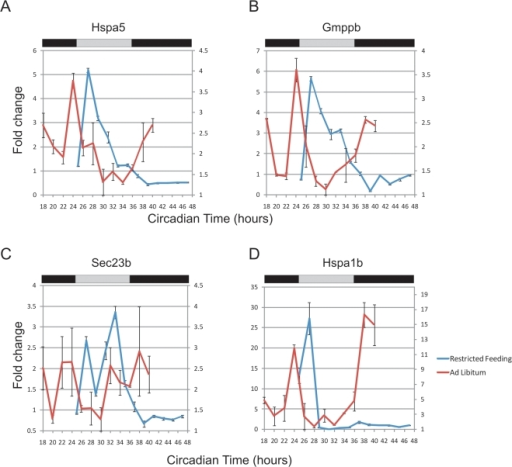 Restricted feeding changes the periodicity of 12 h rhythms.Mice were held in a restricted feeding paradigm (see Methods) and liver samples were collected every 2 h. Quantitative PCR was used to assess the transcriptional profile of eight genes: Hspa5 (A), Gmppb (B), Sec23b (C), Hspa1b (D), as well as Gramd3, Creld2, Gosr2 and Ints2 (data not shown). When compared to samples from ad libitum fed mice (red traces, right axis), restricted feeding samples (blue traces, left axis) showed only a single peak of expression over the course of a complete day (Error bars are +/−S.E.M.).