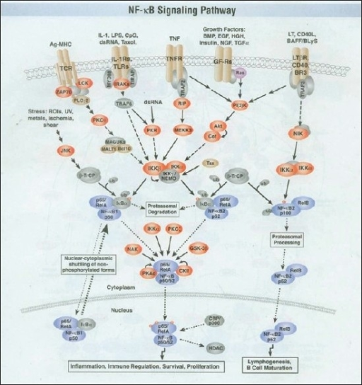 The NFKB signaling pathway