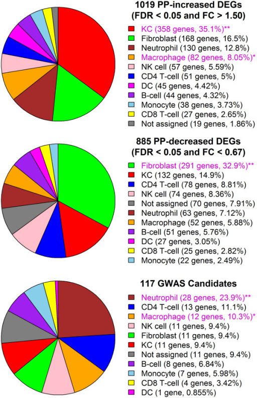 Assignment of psoriasis DEGs and GWAS candidates to cell types present in lesional skin. Human genes were assigned to one of 10 cell types present in psoriasis lesions. Genes were assigned to the cell type for which median expression was highest, provided that the gene's expression was detected in at least 10% of microarray samples for that cell type (P < 0.05, Wilcoxon signed-rank test). If a gene's expression was not detected with respect to at least 10% of microarray samples for any cell type, no assignment was made (i.e., unassigned). Pie charts show the percentage of PP-increased DEGs (top), PP-decreased DEGs (middle) and GWAS candidates (bottom) that were either unassigned or allocated to one of the 10 cell types. Magenta labels denote those cell types for which the number of assigned genes was significantly large in comparison to all skin-expressed genes (PP-increased and PP-decreased DEGs) or in comparison to all genes represented on the Affymetrix Human Genome U133 Plus 2.0 array platform (GWAS candidates) (one asterisk, P < 0.05; two asterisks, FDR < 0.05; Fisher's Exact Test).