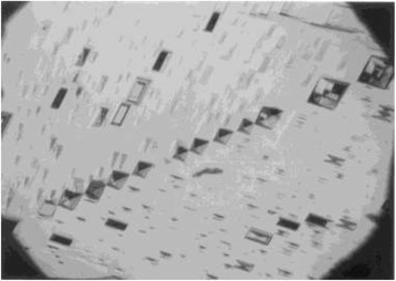 Optical micrograph of etch pits on the (010) face of growth twinned β-HMX.