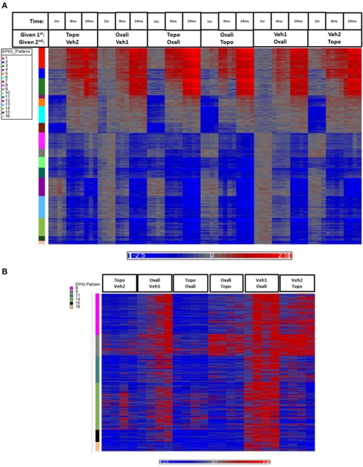 Heatmap of gene expression data analyzed by EPIG. (A) The 1393 gene probes categorized to the 16 EPIG patterns (y-axis color column) across the 1, 6, and 24 h time points are in rows and the samples are in columns. (B) Patterns 8, 9, 11, 14–16 from the samples at just the 1 h time point. The labeling of samples is according to the time and order in which the agent was given (either 1st or second). Oxali is oxaliplatin (15 mg/kg) and Topo = topotecan (4.7 mg/kg). Veh1 is the vehicle used for Oxali, and Veh2 is the vehicle used for Topo. The data is the log base 2 ratio (treated sample to the average of the time-matched control) and the scale on the bottom displays the color range for the log base 2 ratio values. Red denotes upregulation, blue downregulation, and gray relatively no change.