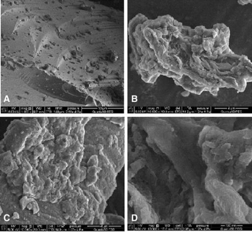 The SEM images of chitosan-silica at 1,000 (A), 10,000 (B,C), and 50,000 (D) magnifications.