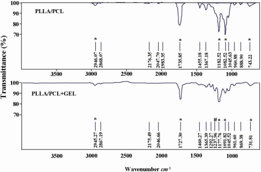 ATR-FTIR spectra of PLLA/PCL and gelatin coated PLLA/PCL. The * indicates characteristic peaks of PLLA/PCL and # indicates peak for Amide III of gelatin.