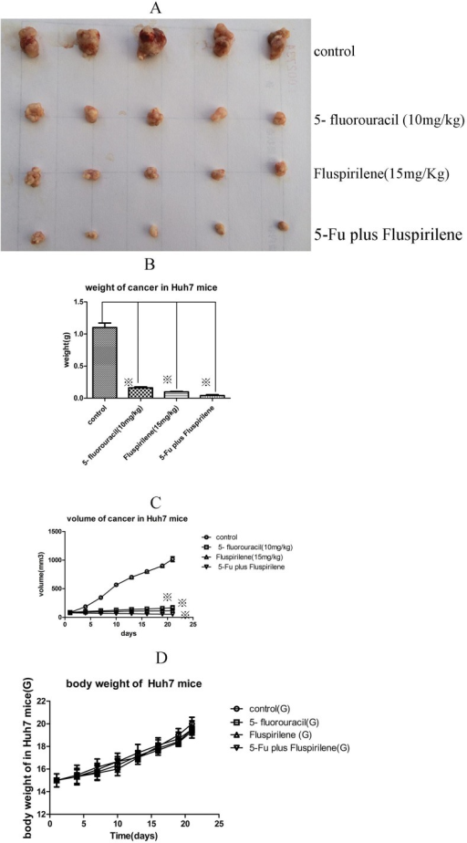 Effects of oral fluspirilene treatment and intraperitoneal injection of 5-fluorouracil on tumor growth in vivo in nude mice xenografted with Huh7 cells.The anti-tumor activity of oral fluspirilene (15 mg/kg) was comparable to that of 5-fluorouracil (10 mg/kg). Furthermore, their cocktail therapy exhibited synergistic therapeutic effect.