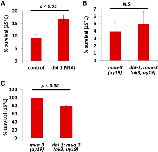 dbl-1 genetically interacts with mua-3 mutants. (A) RNAi of TGFβ2 homolog (dbl-1) rescued the mua-3 lethality at 25°. The numbers are average percent survival ± SEM. (B) A mutation in dbl-1 did not rescue the mua-3 lethality at 25°. (C) A mutation in dbl-1 reduces the survival of mua-3 at 15°.