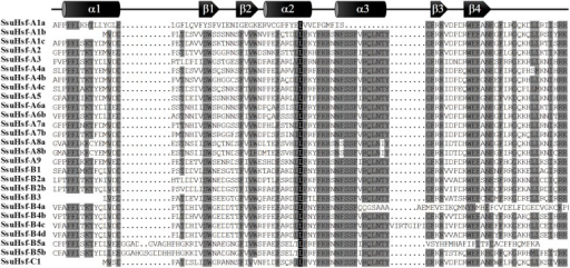 Multiple sequence alignment of the DBD domains of the SsuHsf proteins. The secondary structures of the DBD (α1-β1-β2-α2-α3-β3-β4) are shown above the alignment. α-helices and β-sheets were marked using cylindrical tubes and block arrows, respectively.