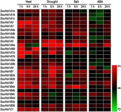 Expression analyses of SsuHsfs under abiotic stresses. Heat map representation for the expression patterns of 27 SsuHsf genes after treated for 1, 6, or 24 h under heat (37°C), drought (20% PEG), salt (150 mM NaCl), or 100 μM ABA. The expression levels of genes were determined using RT-PCR. The different colors correspond to log2 transformed values compared with control (0 h). Green indicates down-regulation and red represents up-regulation. The data were generated by averaging the fold change from each of the three biological replicate experiments. Details of the expression data are listed in Table S3.