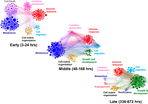 Temporal evolution of transcriptional coregulated networks organized by function after traumatic injury.Each network diagram is composed of statistically significant functional enrichments, where Gene Ontology (GO) terms are clustered by functional category such that all terms with a common ancestor term are the same color. The size of each circle corresponds to the corrected P-value of the associated GO term, and edges in the graph represent interactions between associated GO terms.
