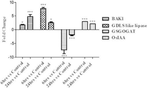 Validation of the microarray data with chosen genes: cDNA was prepared from total RNA isolated from shoots of control (0 h), 6 h, 24 h R. mucilaginosa treated rice plants. BAK1 = Brassinosteroid insensitive 1-associated receptor kinase 1 precursor (LOC_Os11g31540), GDSL like lipase (LOC_Os02g57110), GSGOGAT = glutamate synthase (LOC_Os05g48200.1), OsIAA = OsIAA14 (LOC_Os03g58350.1). [*** (p value < 0.001), ** (p value 0.001 to 0.01) & * (p value 0.01 to 0.05)].