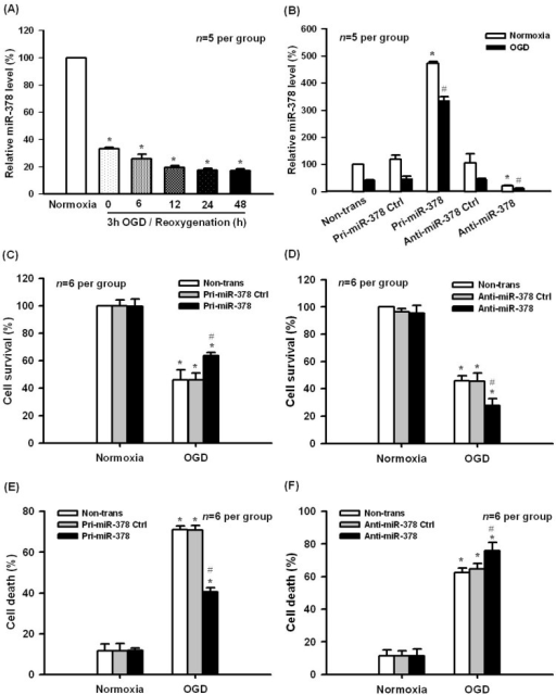 Effect of miR-378 on oxygen-glucose deprivation (OGD)-induced ischemic injury in N2A cells. (A) miR expression decreased in cultured N2A cells exposed to 3 h OGD following different reoxygenation times. * p < 0.05 vs. normoxia, n = 5 per group; (B) Transfection of pri-miR-378 or anti-miR-378 significantly increased or decreased the level of miR-378 in normoxia and 3 h OGD/24 h reoxygenation treatments, * p < 0.05 vs. normoxic non-trans, # p < 0.05 vs. OGD non-trans, n = 5 per group; (C,D) MTT assay showed that pri-miR-378 and anti-miR-378 transfection significantly increased or decreased cell survival, respectively, following OGD treatment; (E,F) LDH assay showed that overexpression of miR-378 substantially suppressed the cell death, while transfection of anti-miR-378 aggravated cell death induced by 3 h OGD/24 h reoxygenation, * p < 0.05 vs. normoxic non-trans, # p < 0.05 vs. OGD non-trans, n = 6 per group.