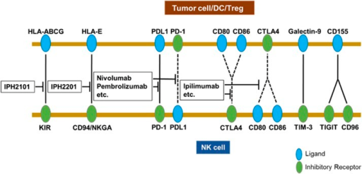 Interactions of immune checkpoint receptors and ligands affecting NK cell functions. NK cells (bottom) express multiple immune checkpoint receptors and ligands. The green color represents receptors and the blue color represents ligands. The ligands on tumor cells are well known to interact with their cognate receptors on NK cells, but it has been reported that ligands on NK cells also interact with their receptors on dendritic cells (DCs) or Tregs; for example, PD-1 on DCs and CTLA-4 on Tregs. However, the effects of the interactions on anti-tumor activity of NK cells may require further confirmation. The dotted lines indicate that the interactions may require further investigation, whereas the interactions marked with solid lines are less debatable. The names in the boxes (middle) show blocking agents that are currently available in clinic.