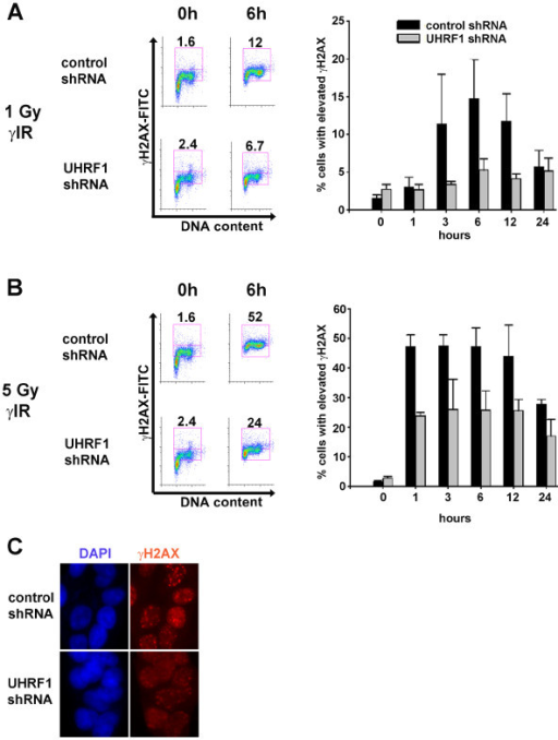 Decreased irradiation-induced γH2AX in UHRF1-depleted cells. UHRF1 and control shRNA-expressing cells were exposed to either 1 Gy (A) or 5 Gy (B) γ-irradiation and harvested following 0, 1, 3, 6, 12 or 24 h. Representative histograms plot γH2AX expression as measured by γH2AX-FITC intensity/cell (y-axis) vs. DNA content (x-axis) (left hand side of panel). Numbers indicate the percentage of cells showing elevated γH2AX levels. The percentage of cells with elevated γH2AX expression plotted is the mean ± S.D. of three independent experiments (right hand side of panel). (C) The decreased accumulation of γH2AX in UHRF1-depleted cells was confirmed by indirect immunofluorescence 12 h after 5 Gy γ-irradiation.