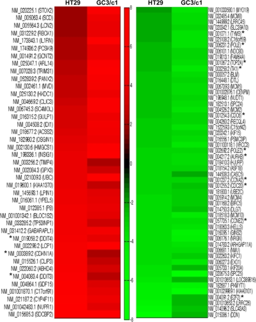 Heat Map Showing Fold Change Patterns Of Most Highly Degs In Gant61 Treated Human Colon