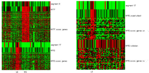 Two examples of cis and trans acting effects of CNVs on gene expressions. Left: Two modules are associated with putative regulators and external segment CNVs. The upper half of the heatmap shows the CNV of segment 9 (chr3p 13-14.2), the expression of MITF (chr3p 14.1) and associated genes on other chromosomes. The module is expressed in melanoma cell lines (ME). The lower half of the heatmap shows the CNV of segment 17 (chr6q 21-27), the expressions of MYB (chr6q 22) and associated genes on other chromosomes. The module is expressed in leukemia cell lines (LE). Right: mRNA expressions of the MYB module under unperturbed and radiation conditions. The upper half of the heatmap shows the CNV of segment 17, expressions of MYB and associated genes under the unperturbed condition. The lower half of the heatmap shows the expressions of MYB and associated genes under radiation.