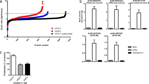 Proteomic characterization of endogenous APEH substrates using N-terminal labeling and enrichment. (a) Measured SILAC ratios for N-terminally enriched and unenriched peptides from the soluble proteome of mouse T-cells treated in situ with AA74-1 or AA39-2 (1 nM, 6 h). Green line designates the two-fold signal change cut-off used to define candidate APEH substrates in AA74-1-treated cells. (b) In vitro APEH exopeptidase activity assay with synthetic N-acetylated hexapeptides. APEH was recombinantly expressed in HEK-293 cells. Whole cell lysates were pre-treated with DMSO or AA74-1 (3 nM, 30 min), incubated with peptides for 10 h, and release of the N-terminal N-acetylated amino acid was measured by LC-MS. Data are presented as means ± s.d. (n = 3). Mock corresponds to control cells transfected with an empty vector. (c) Stimulation of mouse T-cell proliferation by APEH inhibition. Mouse T-cells were treated in situ with the indicated inhibitors (1 nM) or DMSO for 12 h. Cell proliferation was measured using the colorimetric agent WST-1 (*p < 0.05 for AA74-1-versus AA39-2-treated cells; **p < 0.01 for AA74-1- versus AA44-2-treated cells). Data are presented as means ± s.d. (n = 4).