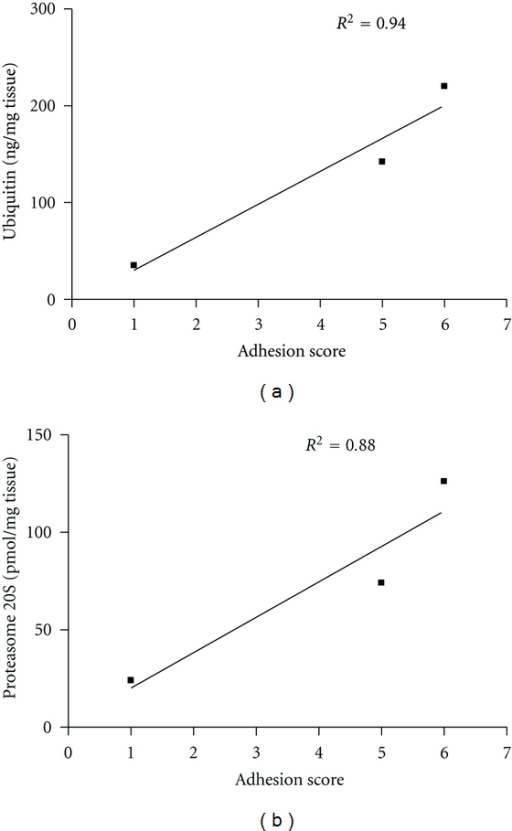 Correlation between the adhesion score and the local levels of ubiquitin and protesome 20S 10 days after the surgery.