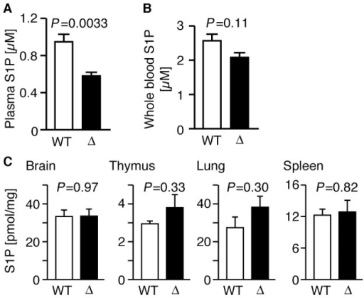 Plasma S1P concentration is decreased in SPNS2-deficientmice.(A) Concentration of plasma S1P in wild-type (WT,n = 14) and SPNS2-deficient mice (Δ,n = 9). The P-value fromcomparisons between WT and Δ samples is indicated. (B) Concentrationof whole blood S1P in wild-type (WT, n = 7) andSPNS2-deficient mice (Δ, n = 5). (C) S1Pcontents of mouse tissues. S1P contents of brain, thymus, lung andspleen from wild-type (WT, n = 3) orSPNS2-deficient (Δ, n = 3) mice were measuredby HPLC. C17-S1P was used as the internal standard. Graphsshow the average values from multiple experiments, with error barsrepresenting the standard error. The P-values ofcomparisons between WT and Δ samples is indicated.