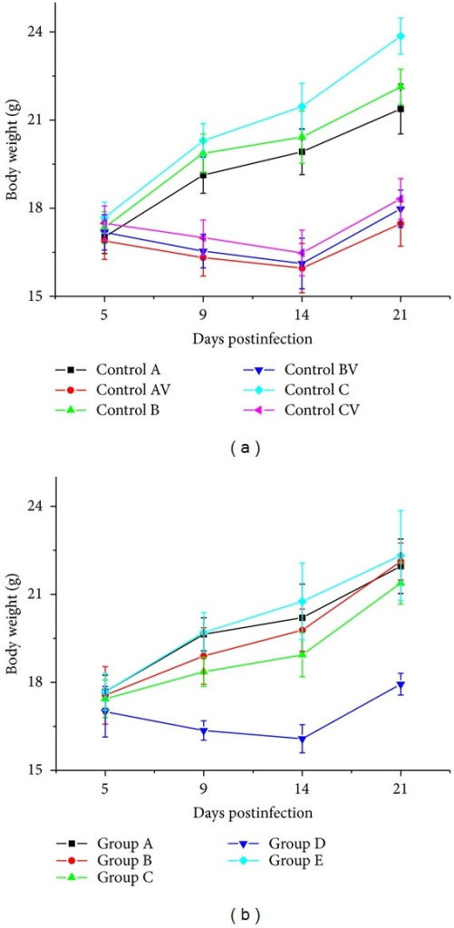 (a) The body weight of mice of the control groups (Controls A, B, C, AV, BV, and CV) at different days postinfection. (b) The body weight of mice of the experimental groups (Groups A–E) at different times after MCMV infection.