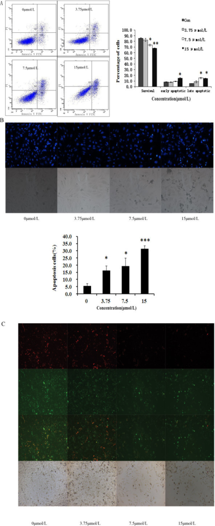 Curcumin induces apoptosis in GBC-SD cells. (A) Cells were incubated with curcumin (3.75, 7.5, and 15 μmol/L) for 48 h, followed by staining with annexin-V/PI. The Q3 quadrant (annexin V−/PI−), Q4 quadrant (annexin V+/PI−) and Q2 quadrant (annexin V+/PI+) indicate the percentage of normal cells, early apoptosis and late apoptosis, respectively. (B) Apoptotic nuclear morphology changes induced by curcumin (3.75, 7.5, and 15 μmol/L) treatment for 48 h, were observed by Hoechst 33342 staining in GBC-SD cell lines. (C) Analysis of the mitochondrial membrane potential (ΔΨm). GBC-SD cells were treated with curcumin (3.75, 7.5, and 15 μmol/L) for 48h and then stained with JC-1. Red fluorescence represents mitochondria with intact membrane potential. Green fluorescence represents de-energized mitochondria. Images were taken with a fluorescence microscope.