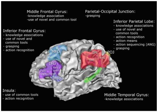 Schematic Illustration Of Left Hemisphere Associations Open I