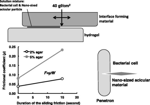 Schematic representation of the Yoshida effect. The Yoshida effect is defined as the formation of complexes called penetrons, which are bacterial cells, each impaled by a single nano-sized acicular material in a friction field formed at a hydrogel interface. The hydrogel, interface forming material, nano-sized acicular material, bacterial cells, sliding friction, and an energy source to provide the friction force are each essential to the formation of penetrons. The hydrogel (e. g., agar, gellan gum, κ-karagenan) involved shear stress at more than 2.1 N. The interface forming material could comprise polymer material such as polystyrene, polyethylene, or acrylonitrile butanediene rubber. The optical vertical reaction force against hydrogel was around 40 gf/cm2. Multi-walled carbon nanotube, maghemite, or α-sepiolite are each nano-sized acicular materials that can generate a Yoshida effect. The sliding friction force can be represented with the following formula: F = μW, where μ and W denote the frictional coefficient and the vertical reaction force, respectively. When using 2 and 5% agar hydrogel, frictional coefficient value increased 0.038 to 0.078 and 0.081 to 0.233 respectively by given sliding stimulus for 15 seconds. The rapid increase in frictional resistance was essential for the Yoshida effect.