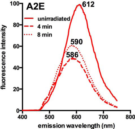 A2E photobleaching by irradiation at 480 nm for 4 and 8 min. Fluorescence intensity decreases with irradiation and the emission maximum undergoes a hypsochromic shift. Emission peak wavelengths (nm) are indicated adjacent to each trace.