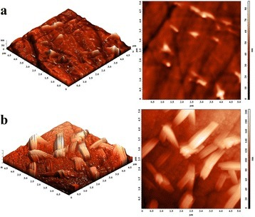 AFM images of 80GeSe2-20Ga2Se3glass annealed at 380°C for 25 (a) and 80 (b) h.