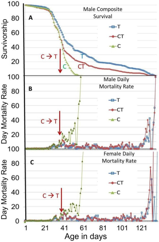 Male and female mortality rate changes in cages with or without SC100 treatment.(A) These data are from the same longevity assays shown in Fig 1, wherein nine independent cages were used, with each cage having 250 males and 250 female B4 flies. To correlate mortality rates with the longevity assays, the male longevity data in the 3 sets of cages of Fig 1D, 1E, and 1F were pooled and composite average values were taken on each day for: C) Control untreated male flies (green triangles), T) SC100 treated male flies (blue squares), and CT) Control/Treated flies that were switched to SC100 treatment on day 36 of the assay (red diamonds). (B) and (C) show composite daily mortality rates for male flies (B) and female flies (C), which were determined by averaging the daily mortality rates from the three sets of cages for each treatment or control.