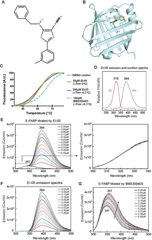 In-silico screening of EI-05(A) Chemical structure of EI-05 (ZINC00467342) (B) The predicted model of EI-05 binding to the lipid-binding pocket of E-FABP. (C) Normalized melting curves depicting enhanced thermal stability of E-FABP by BMS309413 (blue dashed line), but not by EI-05 (orange and purple solid lines). (D) Excitation and emission spectra of EI-05 solved in methanol. (E) Tyr/Trp emission spectra of E-FABP (0.5 μM) in the 300-500 nm range were measured by step-wise addition of indicated concentrations of EI-05. The Try/Trp emission signal between 300-347 nm (dashed box) is enlarged in the right panel. (F) The emission spectra of indicated concentrations of EI-05 in the absence of E-FABP. (G) Tyr/Trp emission of E-FABP (0.5 μM) in the 300-500 nm range was measured by addition of indicated concentrations of BMS309413. Excitation at 270 nm was used for experiments shown in panels E, F and G.