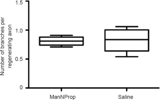 Treatment with N-propionylmannosamine (ManNProp) did not affect the number of branches per regenerating axon.The mean value of branches per regenerating axon in the ManNProp group was 0.80 ± 0.07 (saline group: 0.82 ± 0.18; P > 0.05; mean ± SD; Student's t-test; n = 6 for each group). The number was calculated as the ratio of the number of arborizing axons to the total number of regenerating axons.