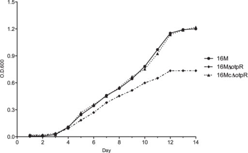 Growth curves of the parental B. melitensis strain 16 M, its otpR mutant 16 MΔotpR, and the mutant complementation strain 16 McΔotpR in a synthetic minimal medium.The minimal medium contains only carbon and nitrogen as the nutrient resources. Compared to the wild type strain, the otpR mutant had a decreased OD600 value. The gene complementation of the otpR mutant resumed the OD600 level. A curve of the optical density values at OD600 determined at several time points reflects the growth dynamics of a bacterial strain in the culture medium over the different time points.