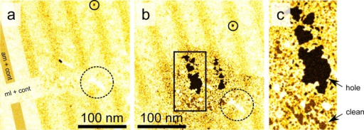"Chemical etching of the amorphous pattern. (a) STEM-MAADFclose-up image of a patterned area of the sample before and (b) afteran exposure of about 1 h to a parallel electron beam while air wasleaked to the objective area of the microscope column (pressure increasefrom ca. 5.3 × 10–9 to 1.1 × 10–6 mbar). The approximate area exposed to the beam corresponds to thedarkened circular shape seen in panel (b). Partial overlay on theleft-hand-side of panel (a) highlights the structure of the pattern(""ml+cont"" corresponds to nonirradiated graphene andcontamination, whereas ""am+cont"" refers to amorphizedareas). Circles with solid and dashed lines mark the same hole andmetal contamination, respectively, in both images to ease the comparison.A higher magnification of the area marked with a rectangle in panel(b) is shown in panel (c) to ease distinguishing holes and clean graphenefrom each other."