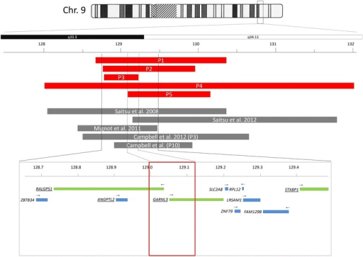 Schematic representation of the microdeletions. Red bars: Microdeletions of patients 1 through 5 are presented. Grey bars: previously published microdeletions. Lower panel: detail with smallest region of overlap (SRO, dashed lines, red box) and RefSeq genes with black arrows showing direction of transcription (green: genes analyzed by expression studies)
