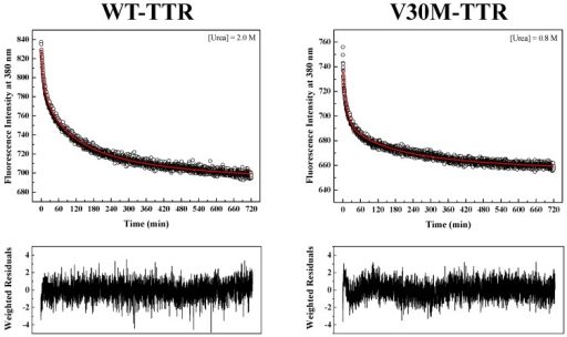 Refolding kinetics of WT-TTR and V30M-TTR monitored by intrinsic fluorescence emission. Fluorescence intensity decays (upper panels) for WT- and V30M-TTR monitored at different urea concentrations, pH 7.0 and 25 °C. The best fitting curves (red lines) to the experimental data points were obtained using Equations (3) to (6). Refolding assays were performed at constant protein concentrations (1.0 µM). Intrinsic fluorescence was monitored at 380 nm with an excitation wavelength of 290 nm. Lower panels show weighted residuals.