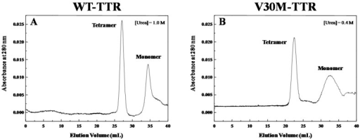 Characterization of the TTR intermediate species. Size-exclusion chromatograms of WT-TTR (A) and V30M-TTR (B) after dilution-induced protein refolding, in the presence of low concentrations of urea. SEC experiments were run at a flow rate of 0.4 mL/min, in 20 mM sodium phosphate buffer, 150 mM sodium chloride, pH 7.0, at 25 °C, in the presence of 1.0 M and of 0.4 M urea, for WT- and V30M-TTR, respectively. Prior to SEC, protein samples were submitted to 2.0 M GdmSCN for 12 h and then dialyzed against the chromatography buffer. In both chromatograms, the two main peaks can be assigned to tetramers and monomers with apparent molecular weights differing by about four-fold.