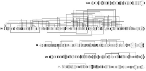 Paracentric chromosomal inversions of Anopheles gambiae sensu stricto. Location of 82 rare chromosomal inversions (above) and 7 common chromosomal inversions (below) on the An. gambiae polytene chromosome complement. Dotted lines indicate breakpoints that could not be unambiguously located to a single infradivision.
