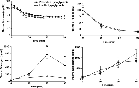 Effect of circulating insulin on plasma glucagon, epinephrine, and C-peptide responses to an equivalent fall in plasma glucose produced by infusion of insulin or phloridzin. The absence of an elevation in circulating insulin magnified the glucagon response, despite identical suppression of C-peptide increments of epinephrine. *P < 0.05.